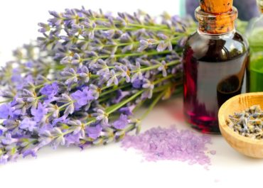 Exploring the Incomparable Healing Benefits of Lavender Essential Oil